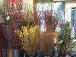 今日のうさみ花店♪|「うさみ花店」 (静岡県静岡市清水区の花屋)のブログ